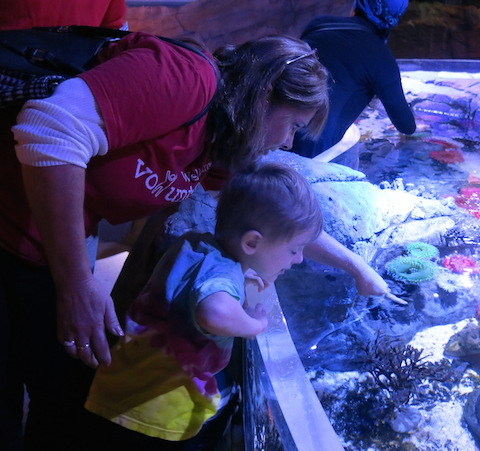 people serving people volunteers at sea life